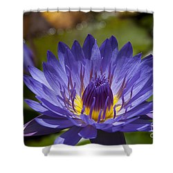 La Fleur De Lotus - Star Of Zanzibar Tropical Water Lily Shower Curtain by Sharon Mau