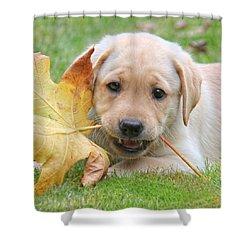 Labrador Retriever Puppy With Autumn Leaf Shower Curtain by Jennie Marie Schell