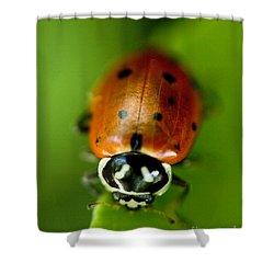 Ladybug On Green Shower Curtain by Iris Richardson