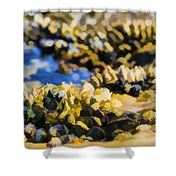 Laguna Beach Tide Pool Pattern 4 Shower Curtain by Scott Campbell