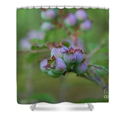 Lake Side  Shower Curtain by Neal  Eslinger
