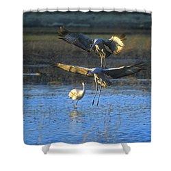 Landing Sandhill Cranes Shower Curtain by Steven Ralser