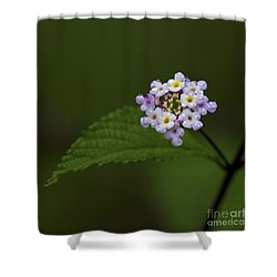 Lantana Ballet.. Shower Curtain by Nina Stavlund