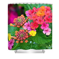 Lantana Shower Curtain by Rona Black