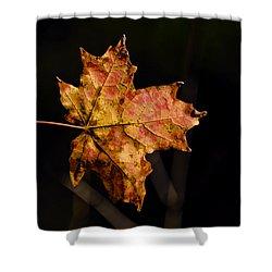 Last Maple Leaf Shower Curtain by LeeAnn McLaneGoetz McLaneGoetzStudioLLCcom
