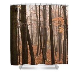 Late Autumn Beech Shower Curtain by Anne Gilbert