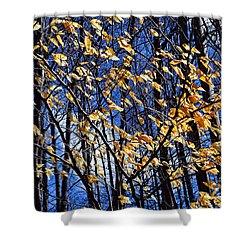 Late Fall Shower Curtain by Elena Elisseeva