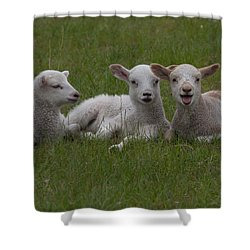 Laughing Lamb Shower Curtain by Richard Baker