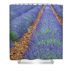 Lavendel 2 Shower Curtain by Arterra Picture Library