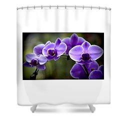 Lavender Rainbow Shower Curtain by Karen Wiles