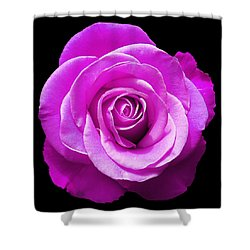 Lavender Rose Shower Curtain by Aimee L Maher Photography and Art Visit ALMGallerydotcom