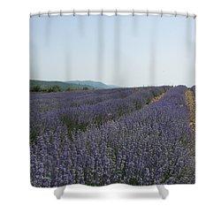 Lavender Sky Shower Curtain by Pema Hou
