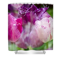 Layers Of Tulips II Shower Curtain by Penny Lisowski