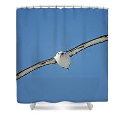 Laysan Albatross Soaring Hawaii Shower Curtain by Tui De Roy
