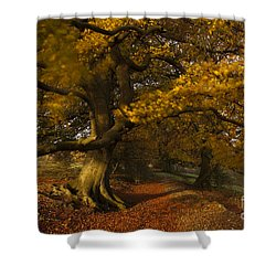 Leafy Lane Shower Curtain by Anne Gilbert