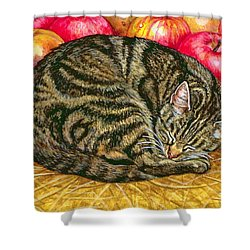 Left Hand Apple Cat Shower Curtain by Ditz