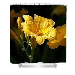 Lemon Yellow Daylilies Shower Curtain by Rona Black