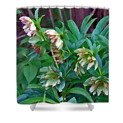 Lenten Roses Shower Curtain by Jean Hall