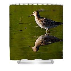 Lesser Yellowlegs Shower Curtain by Larry Ricker