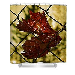 Light Leaf Links Shower Curtain by Rona Black