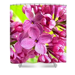 Lilac Closeup Shower Curtain by The Creative Minds Art and Photography