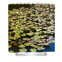 Lilly Pads Shower Curtain by David Pyatt