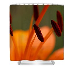 Lily Shower Curtain by Carol Lynch