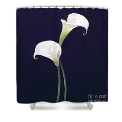 Lily Shower Curtain by Lincoln Seligman