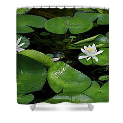 Lily Pads And Blossoms Shower Curtain by Rich Franco