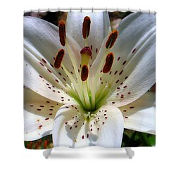 Lily Shower Curtain by Patti Whitten