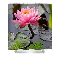 Lily Pink Shower Curtain by Carolyn Stagger Cokley