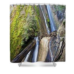 Limekiln State Park Shower Curtain by Jenna Szerlag