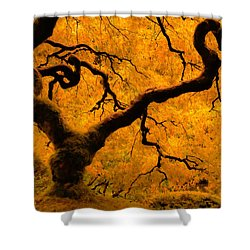 Limned In Light Shower Curtain by Don Schwartz