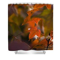 Liquidambar Autumn Shower Curtain by Anne Gilbert