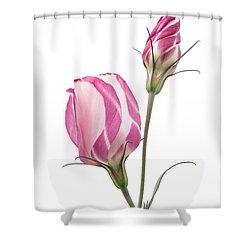 Lisianthus Love 2 Shower Curtain by Ann Garrett