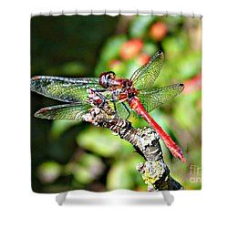 Little Dragonfly Shower Curtain by Morag Bates