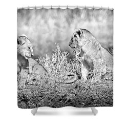 Little Lion Cub Brothers Shower Curtain by Adam Romanowicz