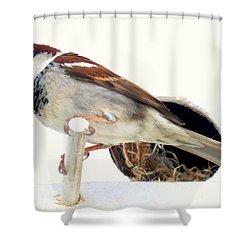 Little Sparrow Shower Curtain by Karen Wiles