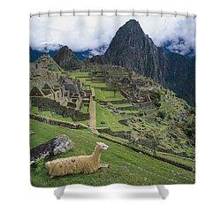 Llama At Machu Picchus Ancient Ruins Shower Curtain by Chris Caldicott
