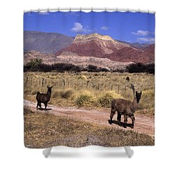 Llamas And Cerro Yacoraite Argentina Shower Curtain by James Brunker