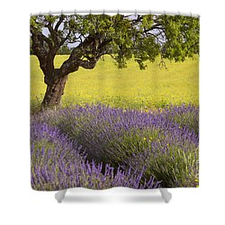 Lone Tree In Provence Shower Curtain by Brian Jannsen