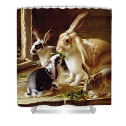 Long-eared Rabbits In A Cage Watched By A Cat Shower Curtain by Horatio Henry Couldery