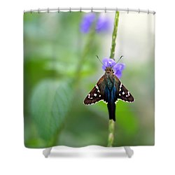 Long Tailed Skipper Shower Curtain by Laura Fasulo