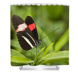 Longwing On A Leaf Shower Curtain by Bryan Keil