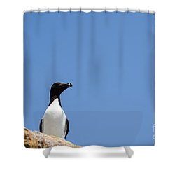 Look At Me Shower Curtain by Anne Gilbert