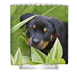 Look For Me Shower Curtain by Heiko Koehrer-Wagner