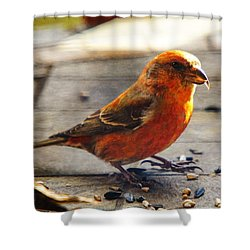 Look - I'm A Crossbill Shower Curtain by Robert L Jackson