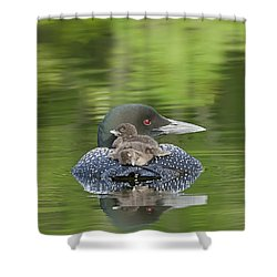 Loon Chicks -  Nap Time Shower Curtain by John Vose