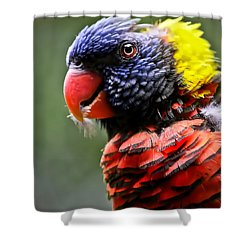 Lorikeet Bird Shower Curtain by Athena Mckinzie