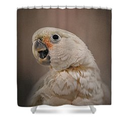 Lots To Say Shower Curtain by Jai Johnson
